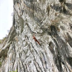 AMBASSADEUR Maxime Loison athlète escalade bloc à fontainebleau looking for wild